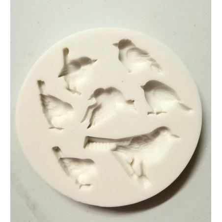 Foremka ptaki
